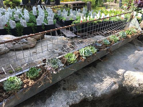 Succulent Chicken Feeder Planter