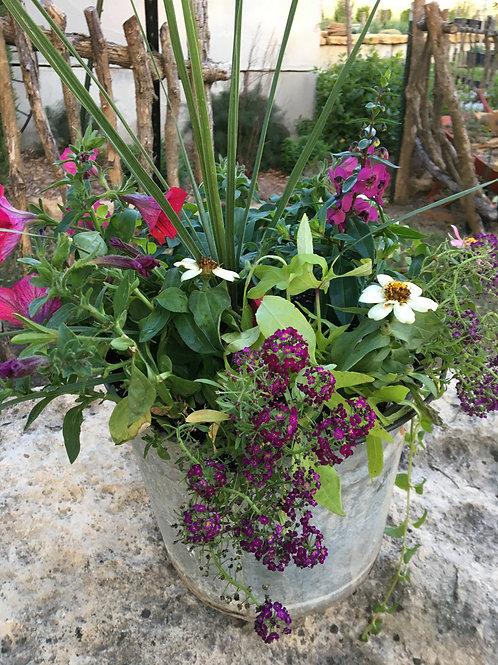 Tin Bucket (Petunia, Alyssum, Zinnia, Sweet Potato Vine)  Combo