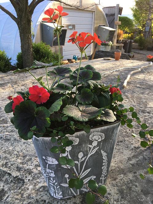 Geranium Combo Flower Tin Bucket (Large)