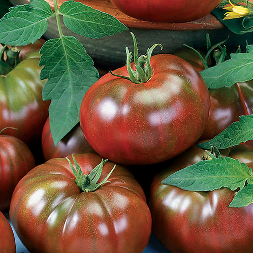 Chef's Choice Black Tomato