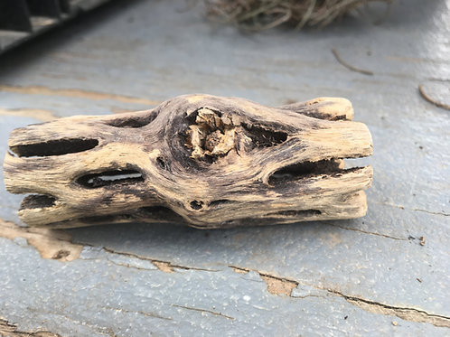 Staghorn Driftwood