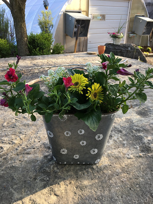 Gerbera and Petunia Combo Flower Tin Bucket (Medium)