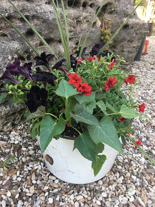 White Metal Bucket (Black Petunias & Red Calibrachoa) Combo