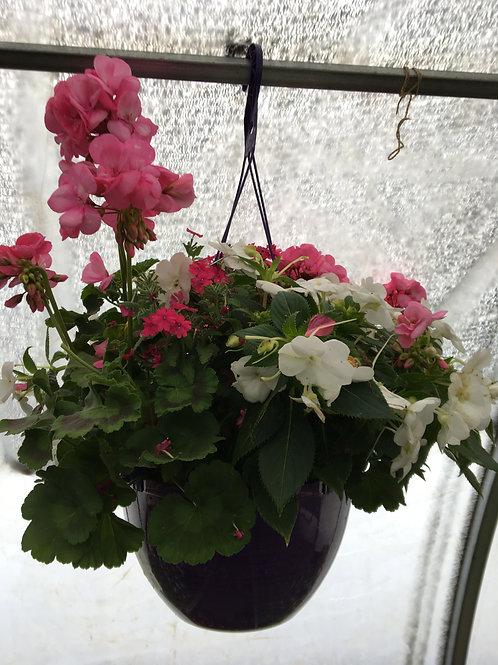 "Hanging Basket (Pink Geraniums, White Impatients) 12"""