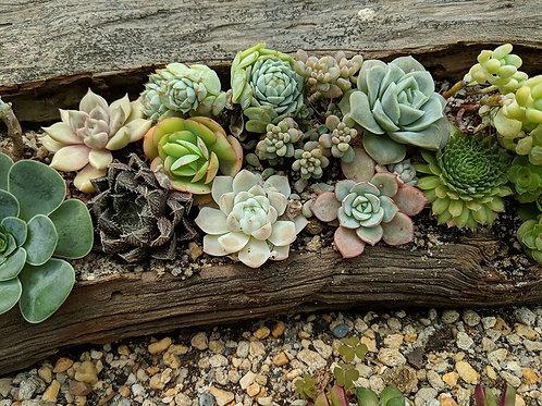 Driftwood Succulent Planter Class