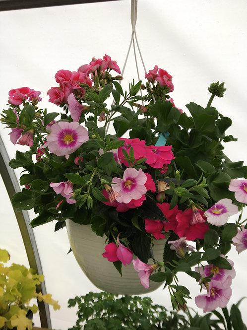 "Hanging Basket (Pink Geranium, Petunia & Impatients) 12"""