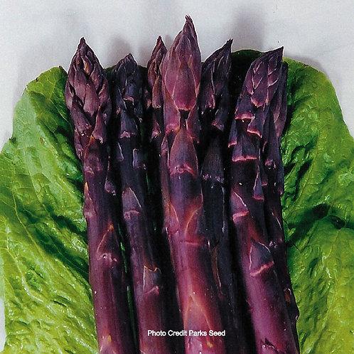 Asparagus, Sweet Purple (roots)