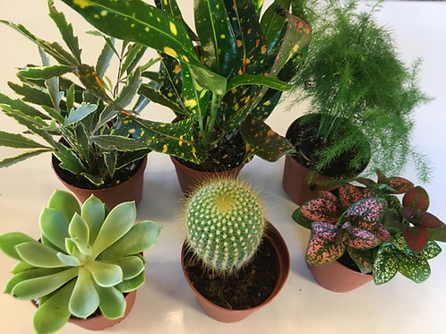 Ultimate Houseplant Pack