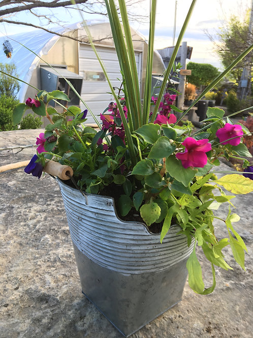 Petunia & Angelonia Combo Tin Bucket