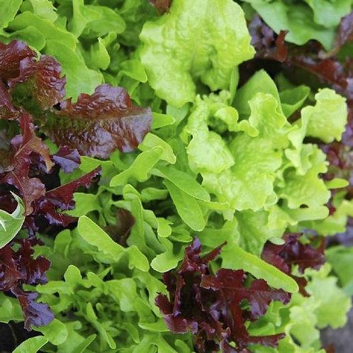 Lettuce Mixed Leaf