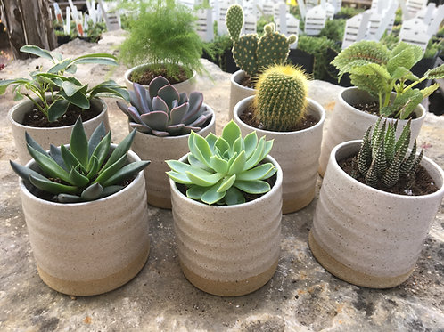 Mini Planters (Handmade)