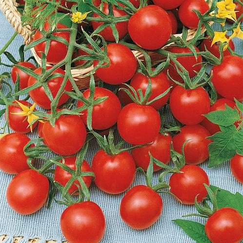 Ladybug Hybrid Tomato