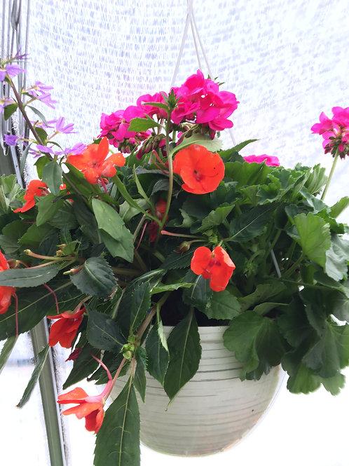 """Hanging Basket (Hot PinkGeraniums, Coral Impatients) 12"""""""