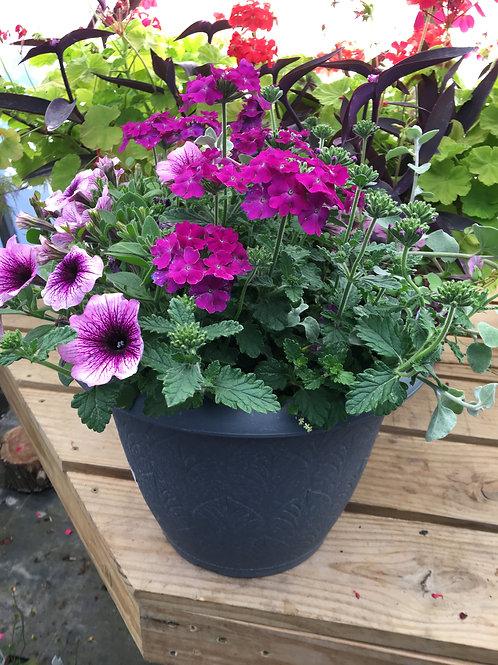 Purple Petunias and Verbenia Combo Pot