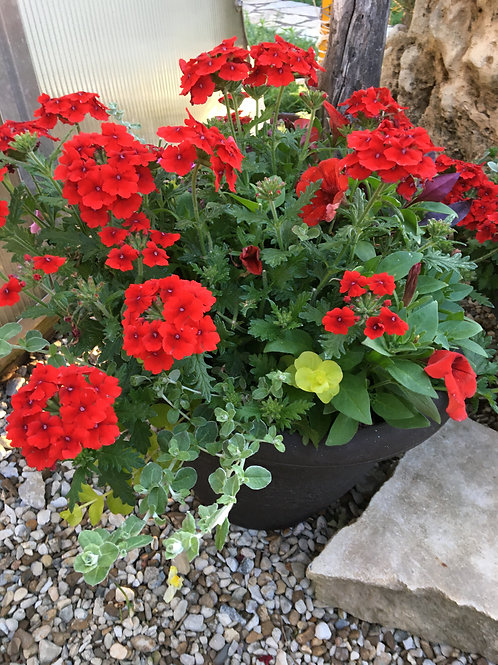 Red Verbena Combo Pot