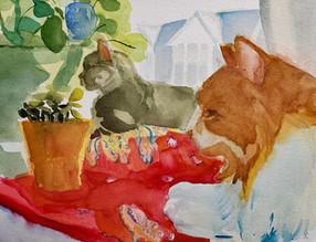 Studio Cats