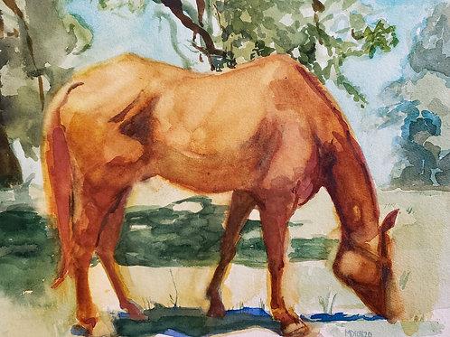 Texas horse