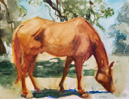 Horse, Marble Falls, TX