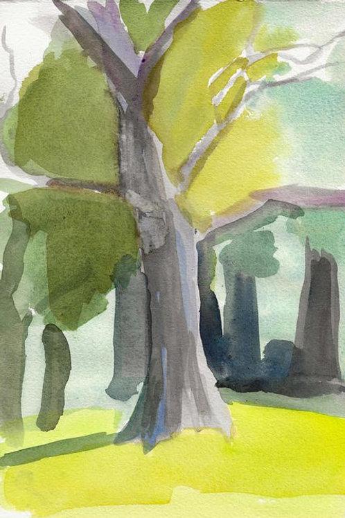 Tree at Ashbridge Park, Bryn Mawr PA