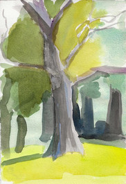 Tree, Ashbridge Park Bryn Mawr PA