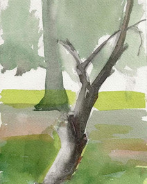 Split tree, Ashbridge Park Bryn Mawr PA