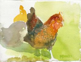 Chickens, Hopeland Farm Lititz PA