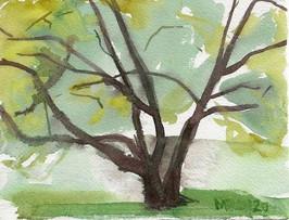 Japanese Cherry, Ashbridge Park Bryn Mawr PA