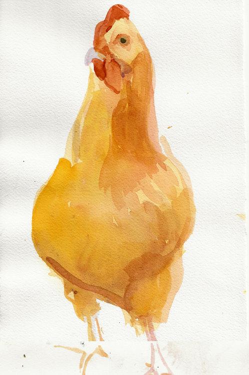 Standing chicken, Lititz PA