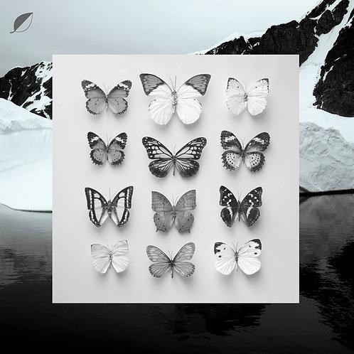 "Christian Löffler – Young Alaska LP+7"""