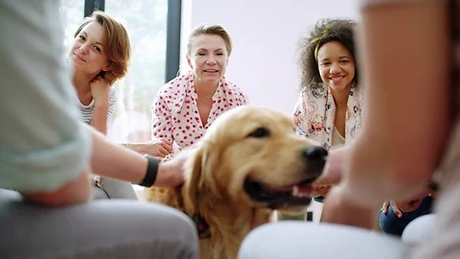 group-petting-therapy-dog-group-footage-