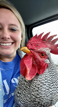 Ali Worley with a rooster that was found roaming an apartment complex. We were able to utilize one of our resources to send him to a local rescue.