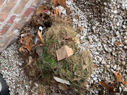 Can you spot the hidden armadillo?