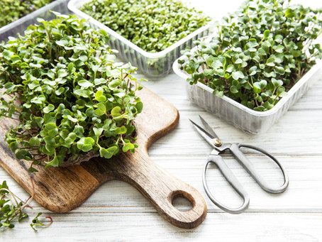 5 Benefits of Microgreens That Will Boost Your Health