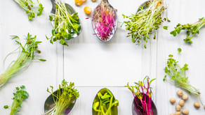 3 Best Microgreens Trays You Should Add to Your ShoppingCart