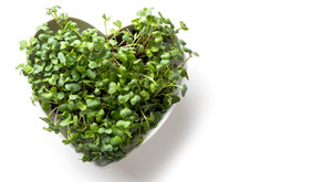 5 Microgreen Types Packed with Nutrients You Should Be Eating