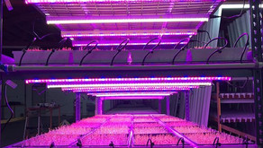 Facts about the microgreens grow system
