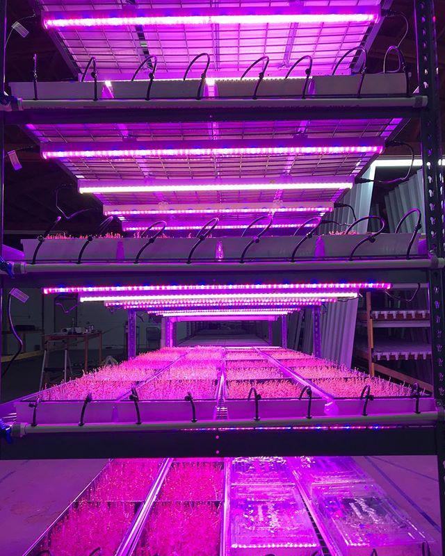 microgreens grow system