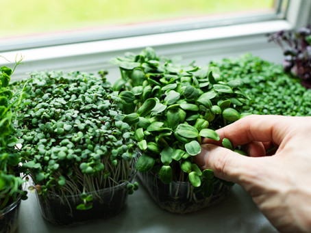 Microgreens List of Resources to Add to Your Library