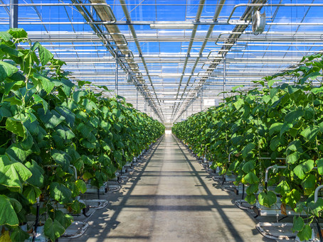 Hydroponic Nutrient Solution: A Must-Read Essential Beginner's Guide
