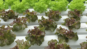 Tips on How to Set Up Large Hydroponics Farm