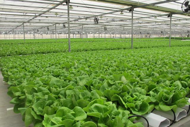 AM Hydro Farm