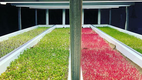 Resources to help become a microgreens grower