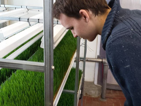 How to operate a NFT microgreens system
