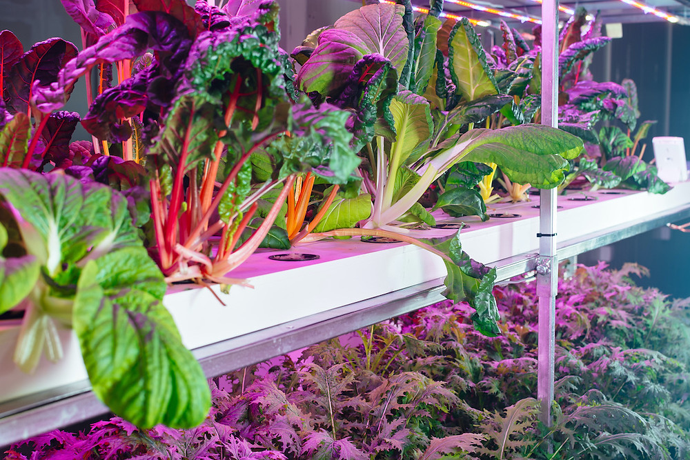 hydroponic foods