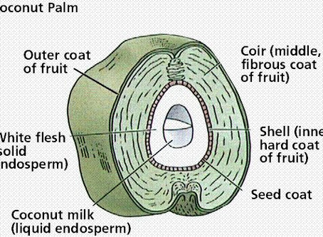 Understanding coco coir as a grow medium
