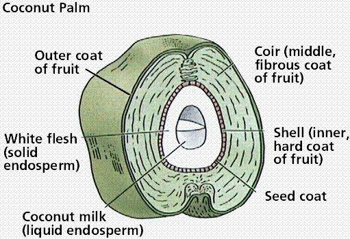 coco chart