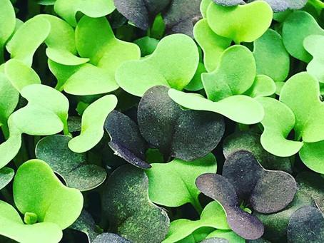 Microgreens Mixes