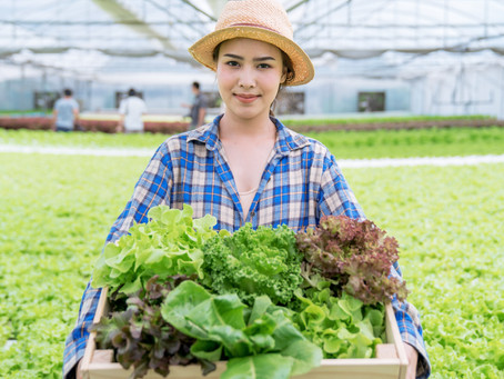 What to grow and what not to grow with hydroponics