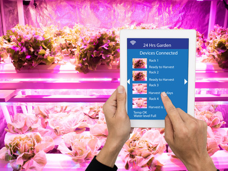 Pros and Cons of Vertical Farming Systems: What You Need to Know