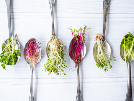 Harvesting Microgreens 101: What You Need to Know